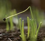 آزمایش داروین و خم شدن گیاه به سمت نور