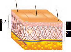 لایه های مختلف پوست